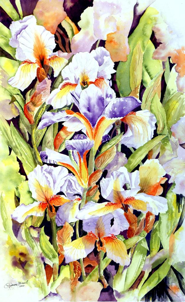 2012 - Iris - 34 x 55 - Arches 300 gr