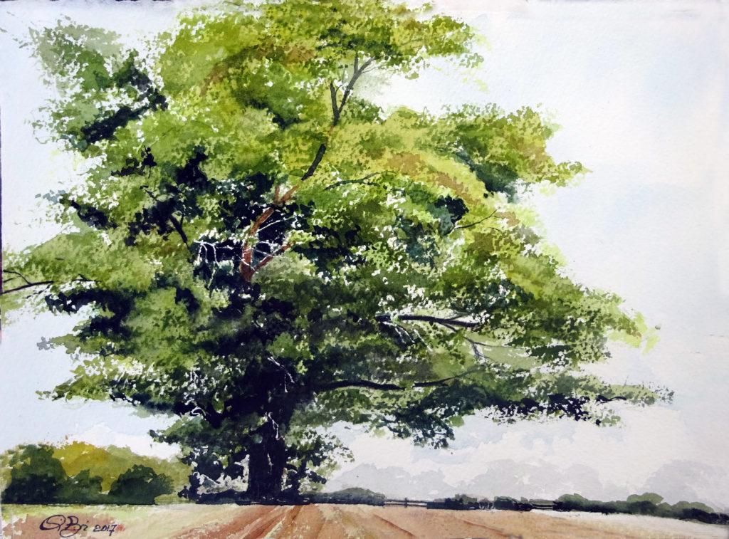 2017 - Studio di albero - Omaggio a Ian Sidewai  -  28 x 24 - Arches 300 gr