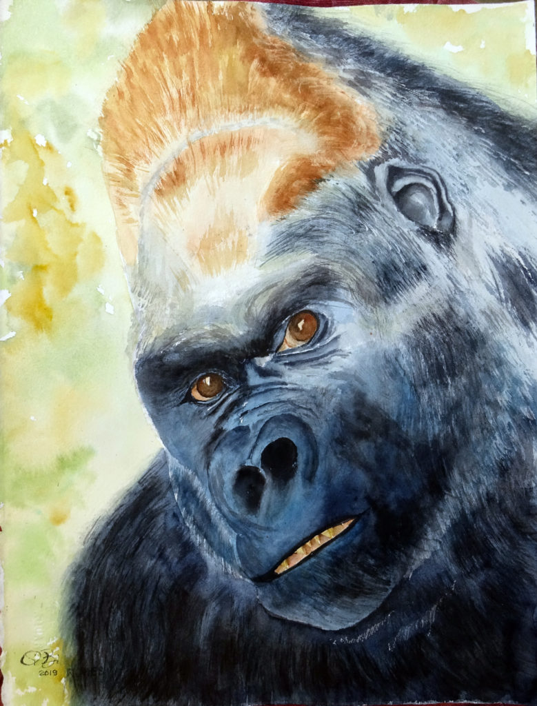 2019 - Gorillone n. 4 - 28 x 38 - Arches 300 gr